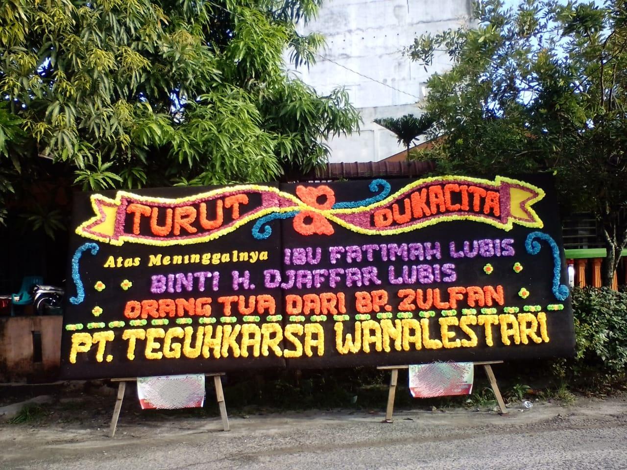 bunga papan di sibolga prov. sumatera utara